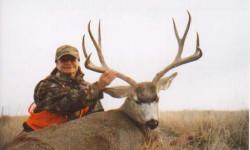 db_Mule-Deer3