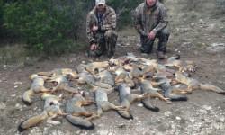 Fox Kills.jpg